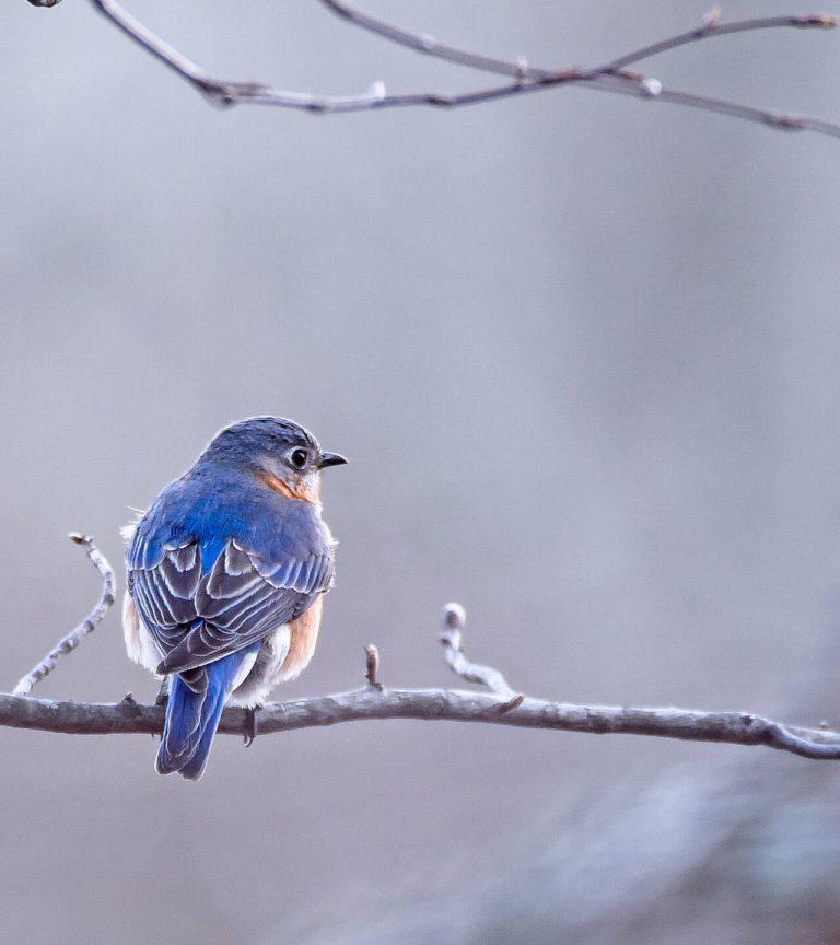 small blue bird resting on branch