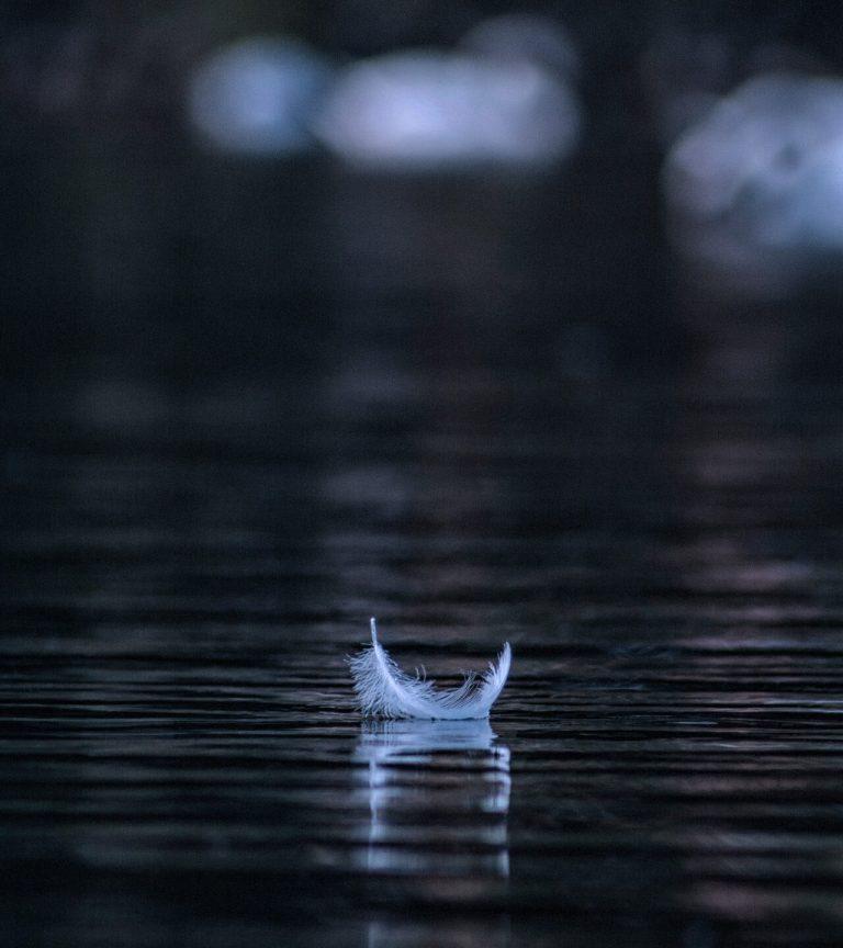 white feather on dark still water