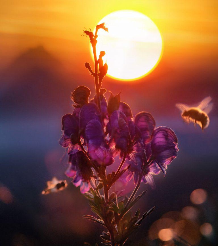 sun behind pink flower