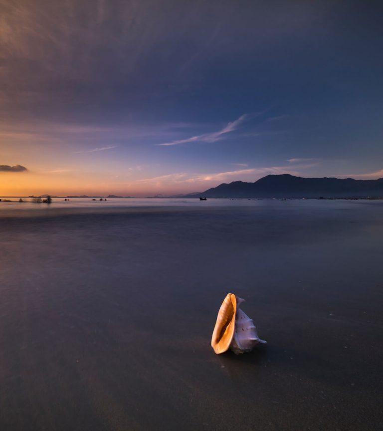 pink conch shell on dark empty seashore