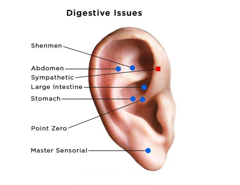 auriculotherapy diagram of ear showing acupoints for digestive issues