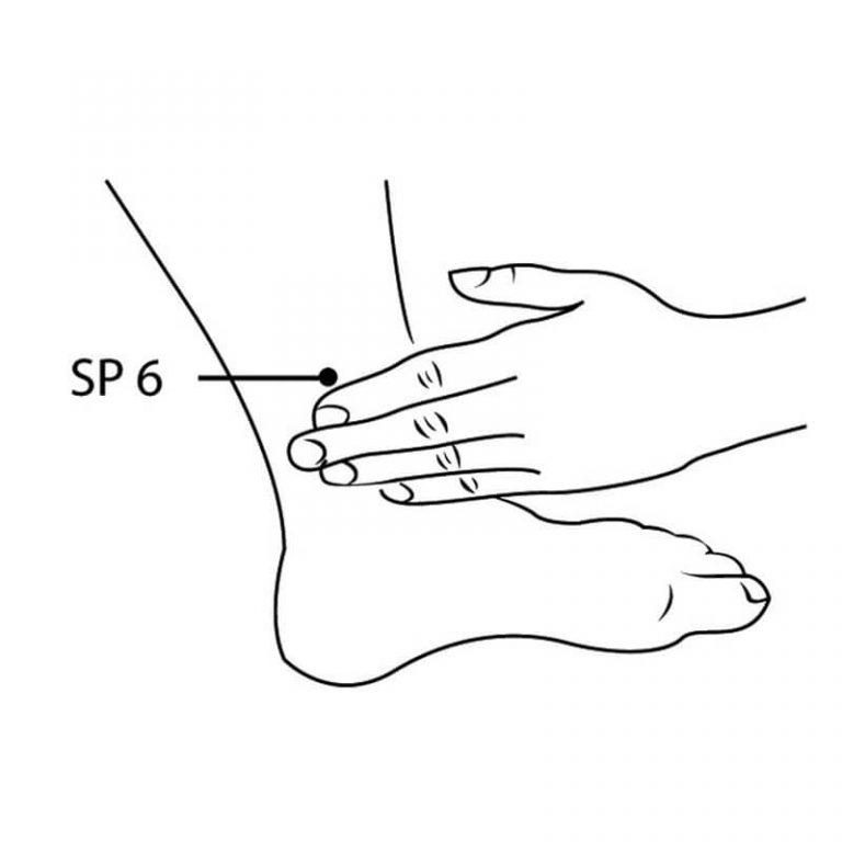 acupoint diagram - lower inner leg